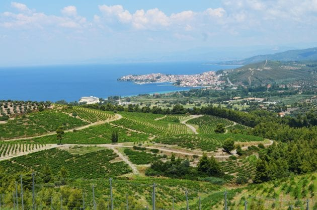 The vineyards and view at Porto Carras