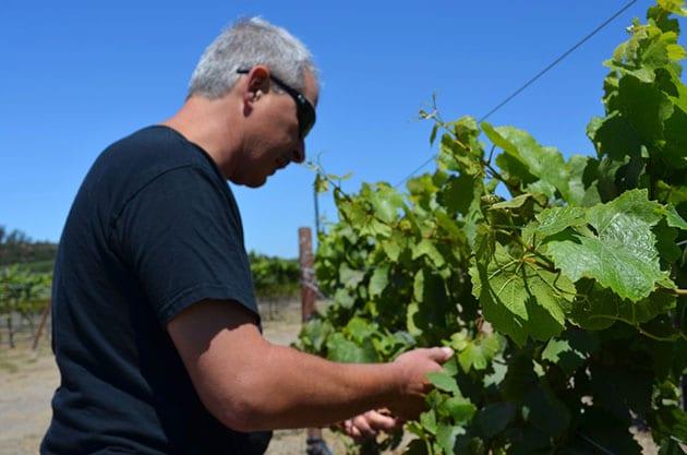 Dan Kessler in the Vineyard