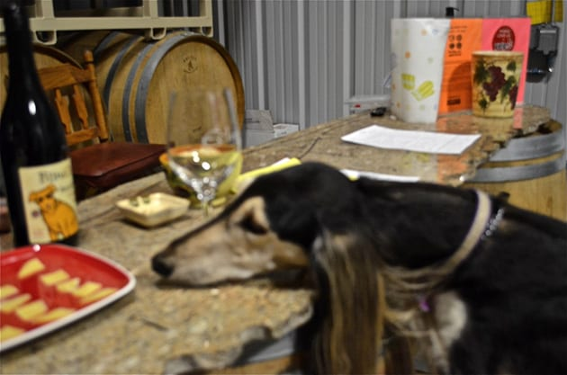 Dog-friendly Ecluse Winery