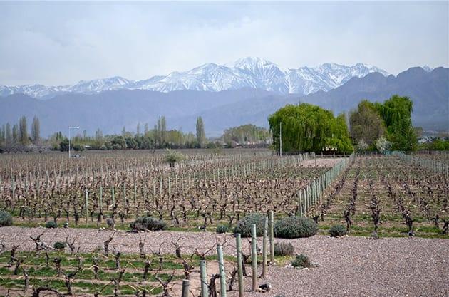 Cheval des Andes Vineyards