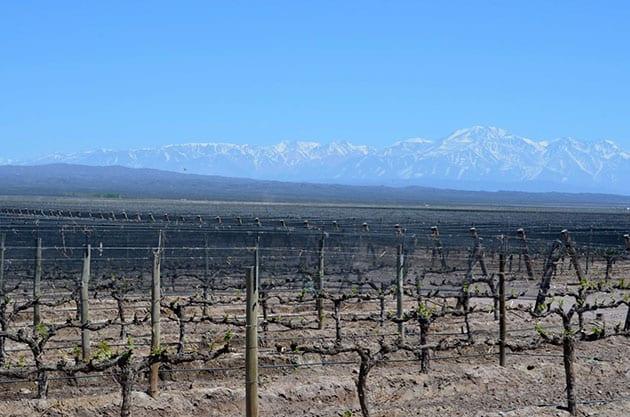 Valle De Uco Vineyards