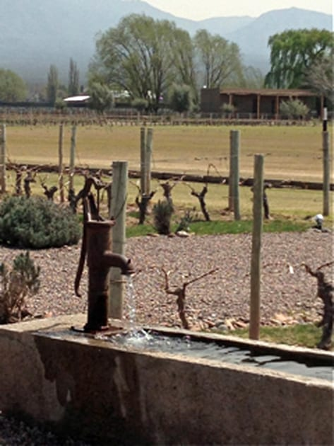 Cheval des Andes Vineyard and Polo Field