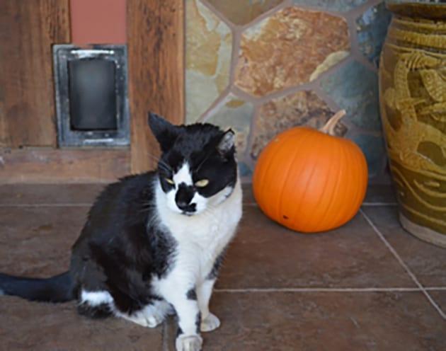Bushwack the cat welcomes you at Eden Vale Inn
