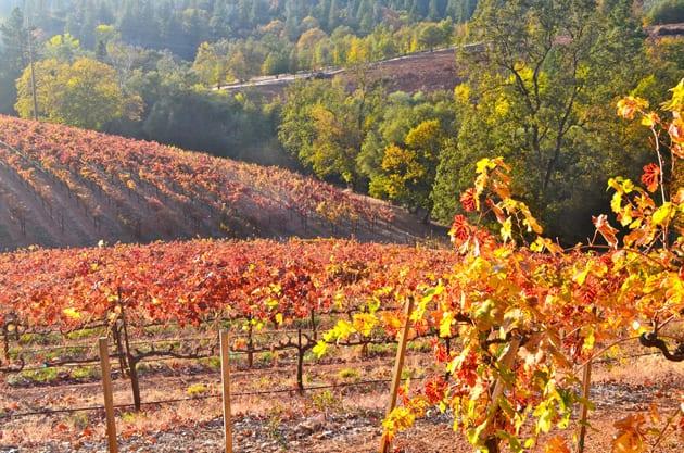 Boeger Winery Vineyards