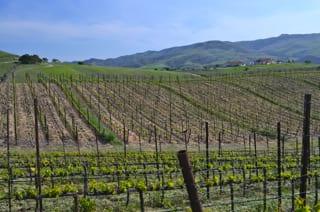 Ampelos Sustainable Vineyards