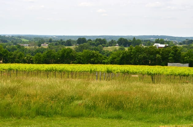 Missouri Wine Country- Robller Vineyards