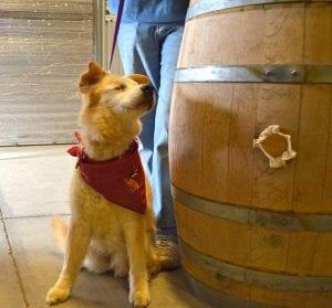 Elcuse Wines Sheltor Dog blind dog