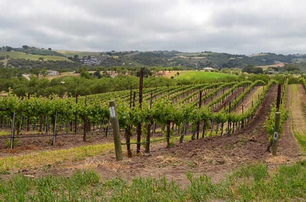 Toby's Vineyards at Ecluse Winery