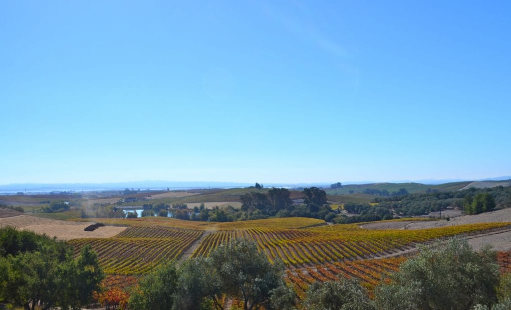 Artesa Winery View from Terrace