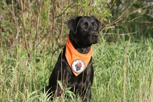 Search and Rescue Dog Pearl