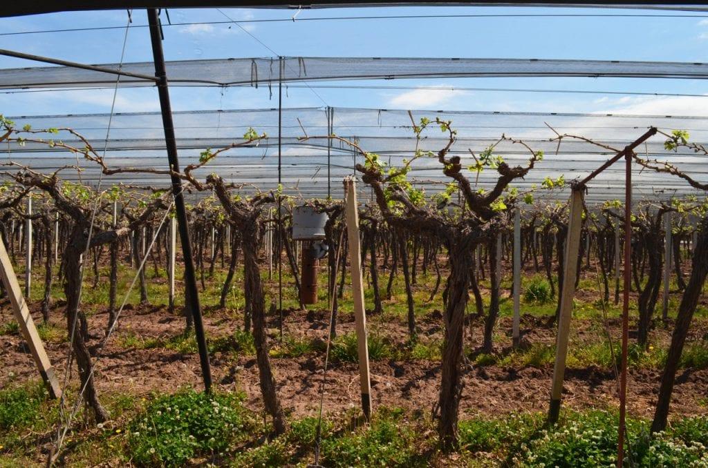 Zuccardi Vineyards