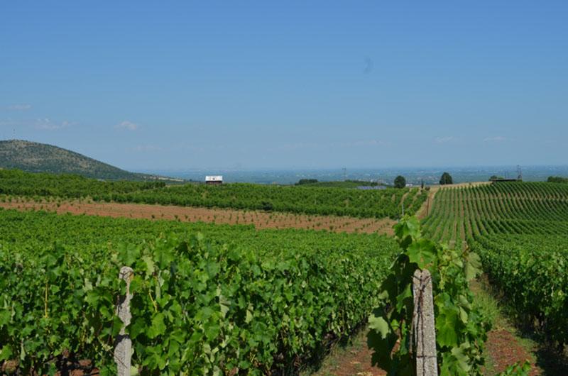 Wine Picnic Elinos Vineyards View
