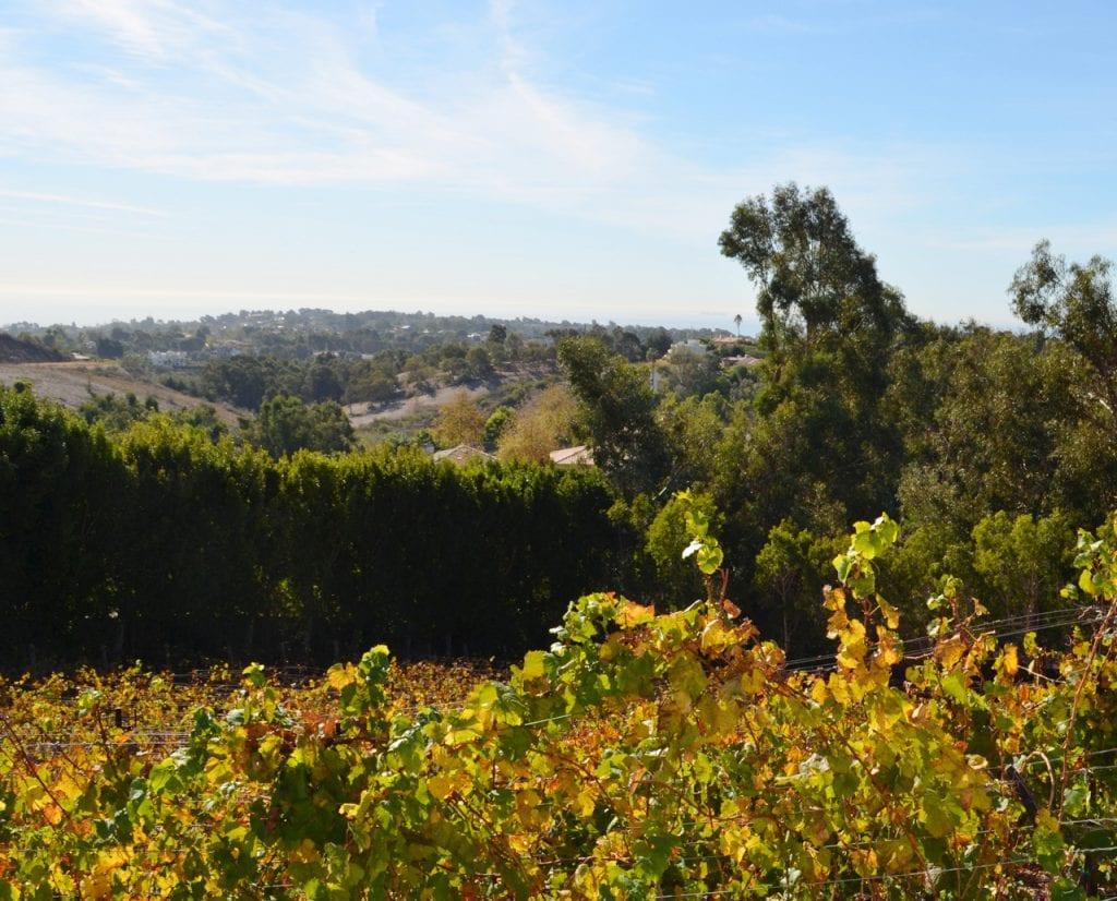 Dolin South Facing Vineyards