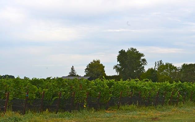 Pearl Morissette Vineyards in the Niagara Wines region