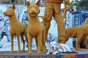 Gabe, a Military Labrador