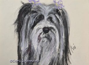 Sydney Tibetan Terrier by Cori Solomon