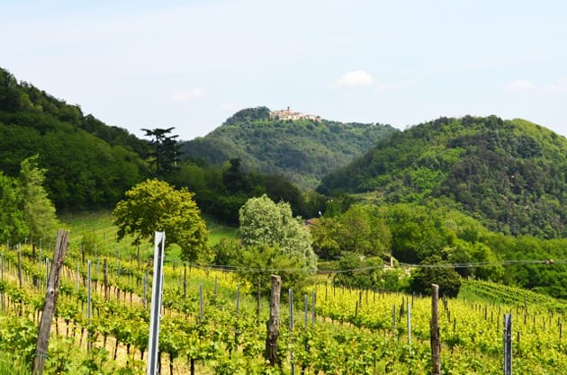Ca' Lustra Vineyard view, Colli Euganei