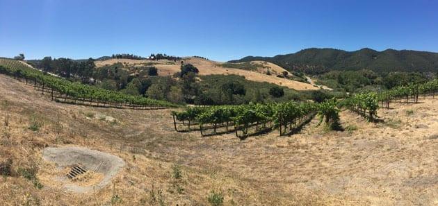 View at Bassi Vineyards