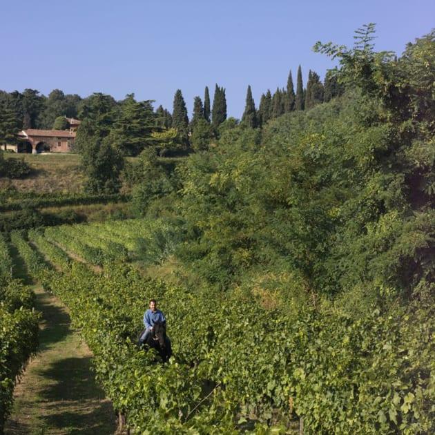 Alberto Coffele in the Vineyards