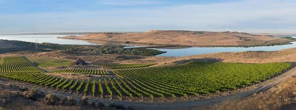 Mercer Wine Estate Spice Cabinet Vineyard, Horse Heaven Hills AVA