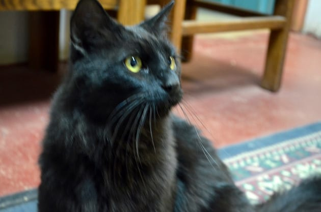 Rosario Mission Cat