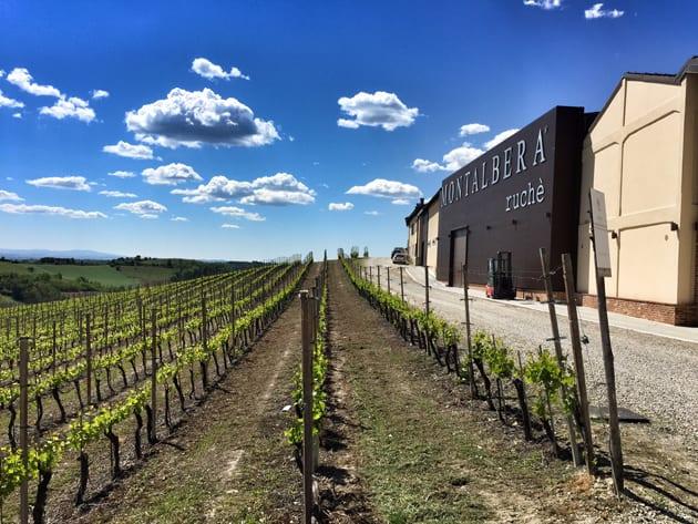 Montalbera Winery and Vineyards