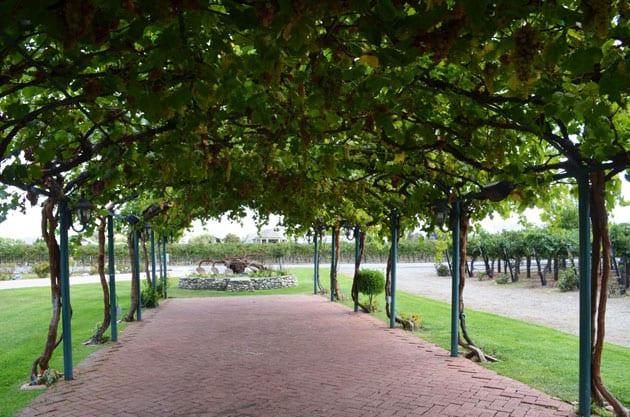 Picturesque Arbor at Concannon Vineyard