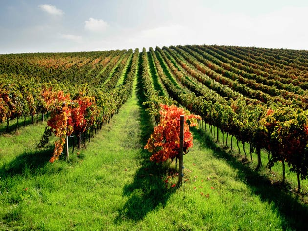 Italian Wine Region Marche - Velenosi Vineyards