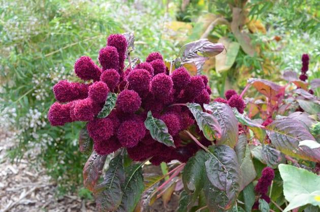Wente Vineyards Gardens