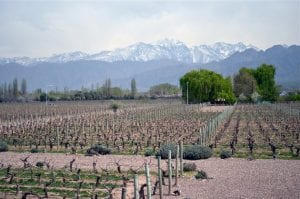 Mendoza Vineyard Malbec World Day