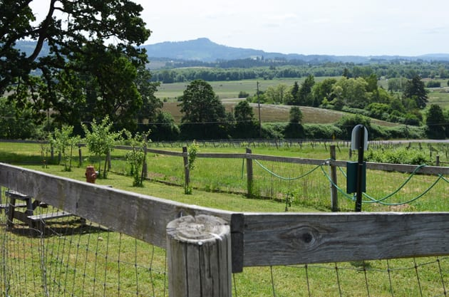 Dog-Friendly Places, Dog area at Plum Hill Winery