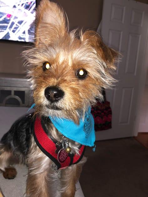 Hugo, Jenna Fishoff's Dog