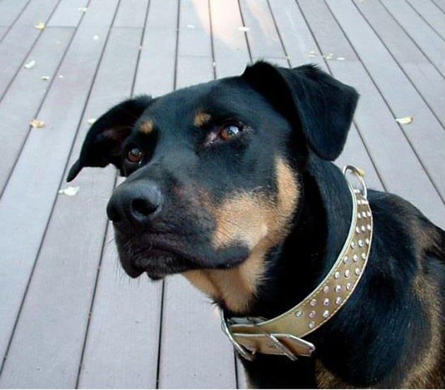 Ruby Vineyards Wnery Dog Stanley