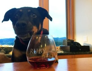 Ruby Vineyards Winery Dog Stanley