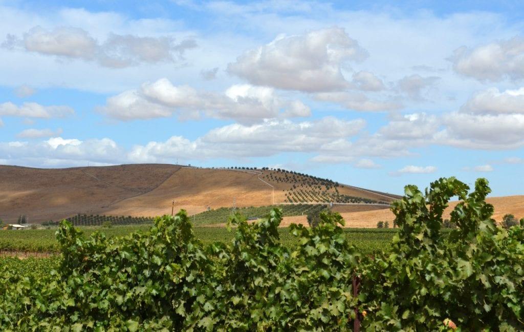 Ghielmetti Estate Vineyard, Livermore Wine Country