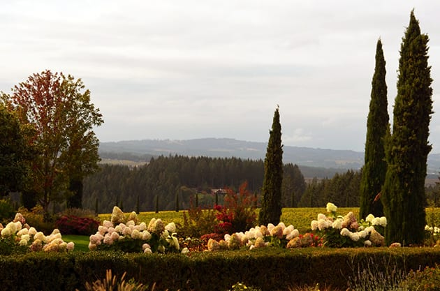Alloro Vineyard Landscape, Chehalem Mountains AVA