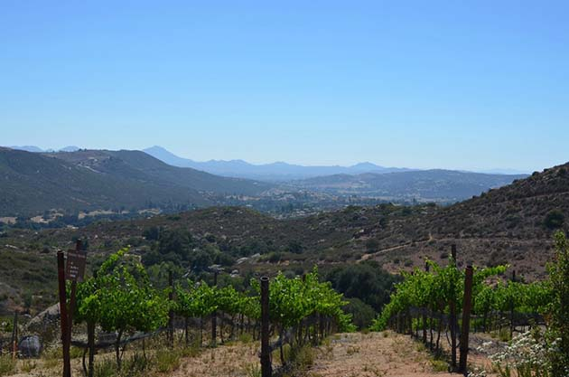 View from Milagro Farm Winery