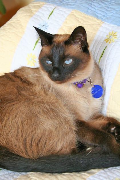 Sparky's Visitation - A Cat Message
