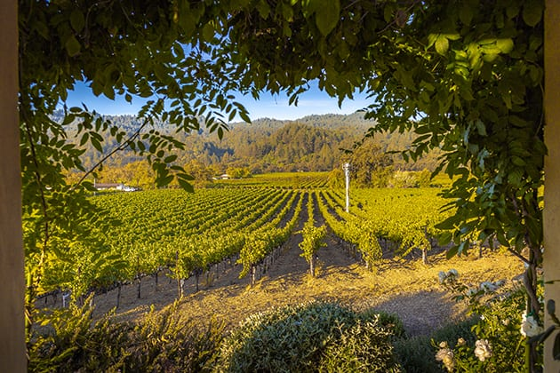Ehlers Estate-Titus - Napa Vineyard
