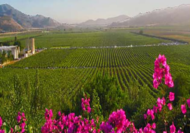 GUADALUPE VALLE_VINEYARDS