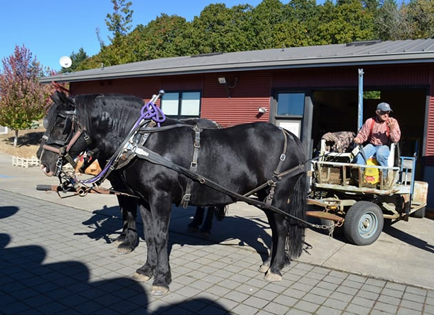 Illahe Percheron, French draft horses
