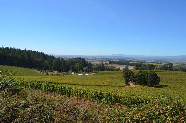 Valley View of Eola-Amity Hills - Eola Hills Wine Cellars