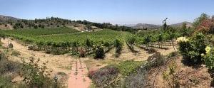 Highland Valley Wineries Vista View