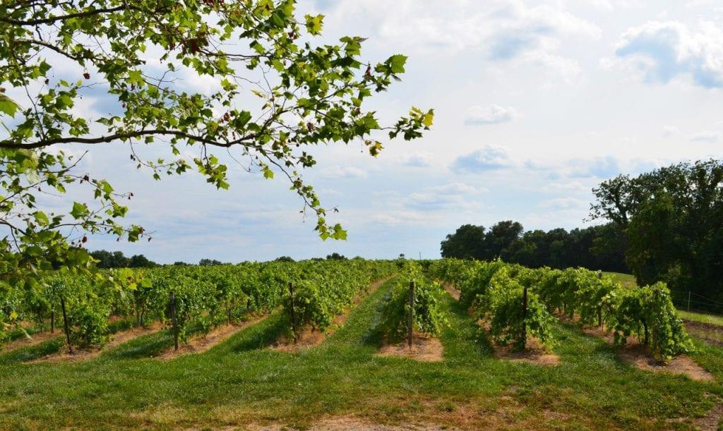 Hermannof Vineyards-Herman Missouri Wine