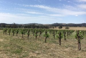 Lowe Winery Vineyards