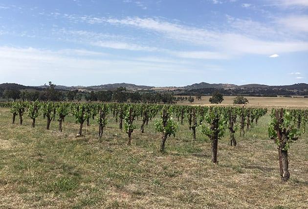 Australia Wine Country Lowe Winery Vineyards