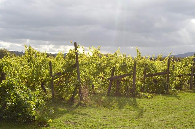 Willamette Valley Winery -Tyee Vineyards