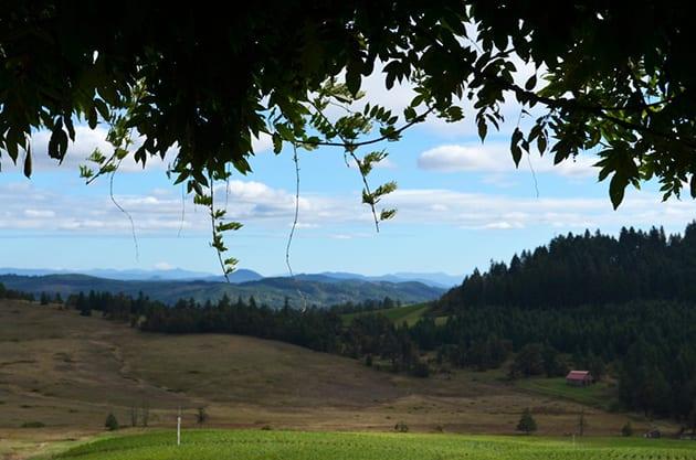View from Iris Vineyards