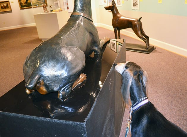 Zoe Exploring the AKC Museum of the Dog