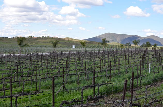 Temecula Valley Vineyard View Chapin Family Vineyards